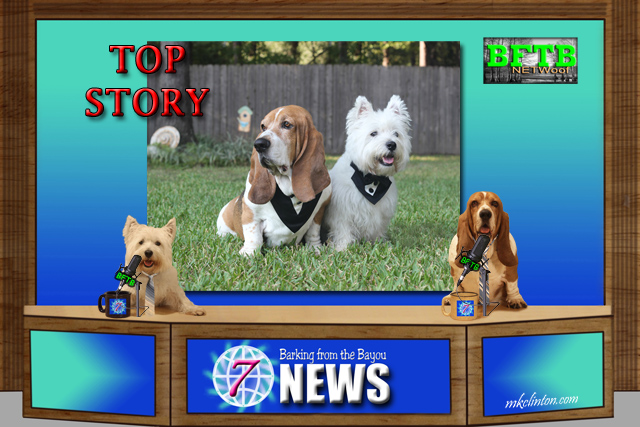 BFTB NETWoof News Top Story features NY Pet Fashion Show