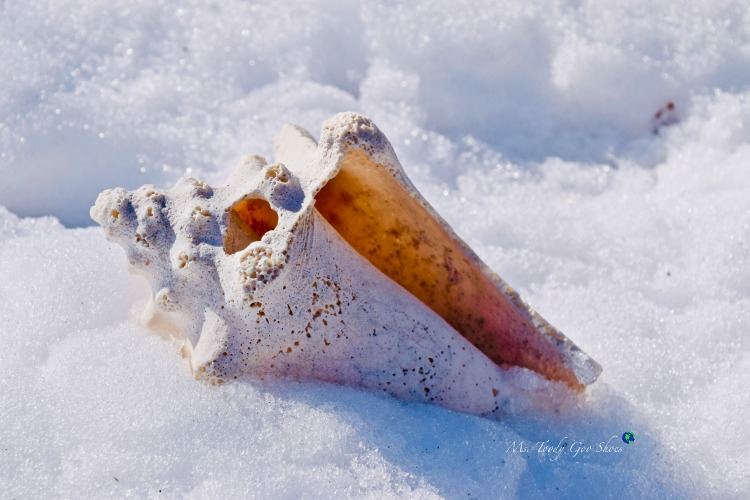 Seashells in the snow - why not? | Ms. Toody Goo Shoes