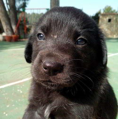 cachorros de tamaño pequeño 4