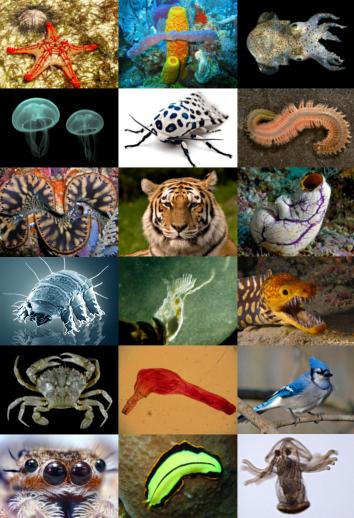 Urutan Tingkatan Takson Dalam Klasifikasi Species Genus Famili Ordo Classis Phyllum Dan Kingdom Salam Pengetahuan