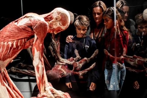 Real Human Bodies at Body Worlds London