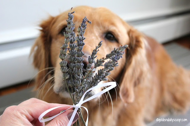 the nurturing paw french lavender dried bouquet