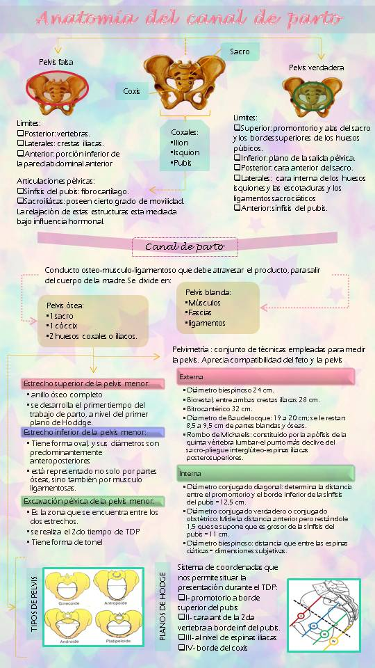 Amairani Baez. Ginecología y obstetricia 2016. Grupo 1