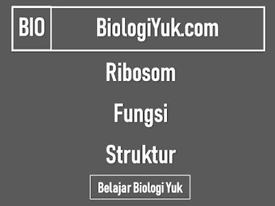 Ribosom Sel: Fungsi dan Struktur (Terlengkap)