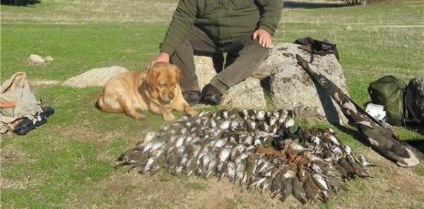 """Θεσπρωτία: Ξεκίνησε η """"απόβαση"""" των Ιταλών κυνηγών"""