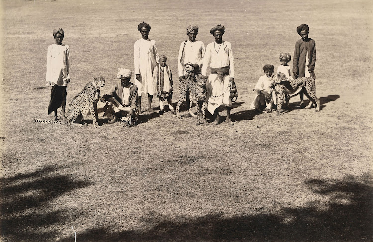 Hunting Cheetas at Baroda - 1895