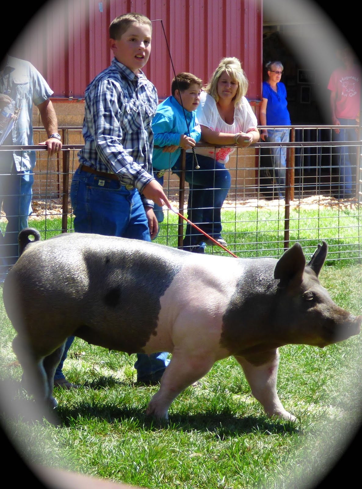 Our Journey Deschutes County Fair 4 H Swine Competition
