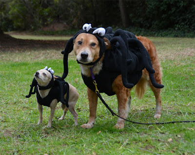 dogs in Halloween costumes