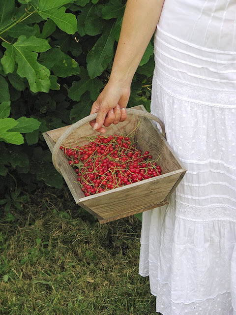 Recette avec des groseilles du jardin - le carnet sur l'étagère