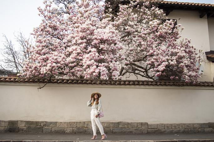 adina nanes printre magnolii inflorite