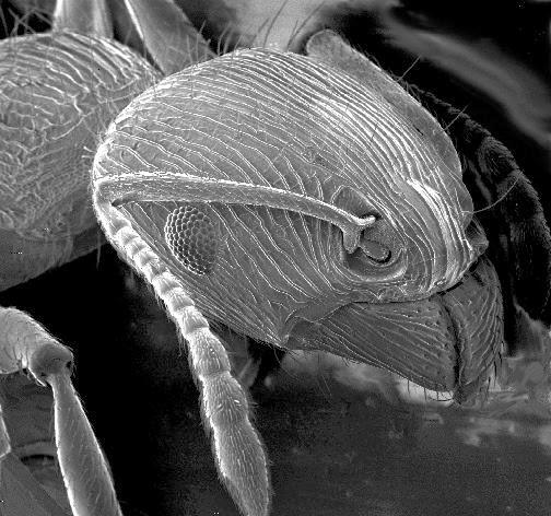 Biología La Ciencia De La Vida Noviembre 2013
