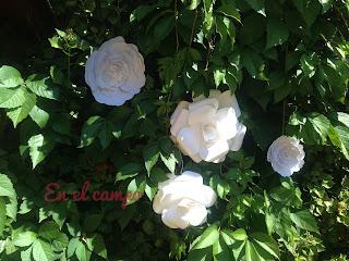 flores de papel decoración bodas flowers paper wedding decoration fleurs en papier pour décoration mariage