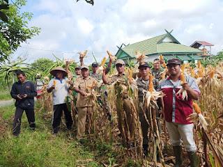 Bukti Babinsa 1014-10 Dukung Swasembada Pangan, Petani Panen jagung