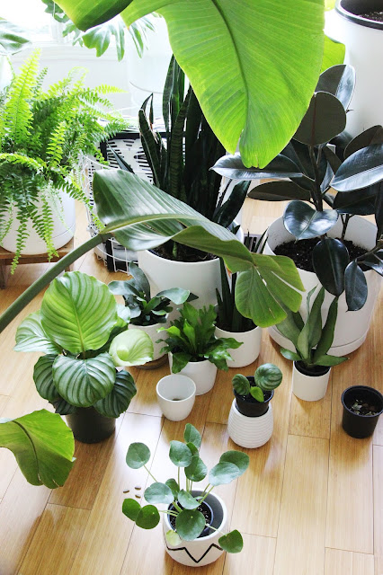 image of various tropical indoor plants