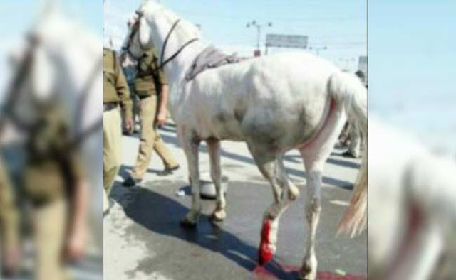 BJP MLA Ganesh Joshi repeatedly hit a police horse's leg with a lathi during a protest in Dehradun on Monday.  The horse's leg needs to be amputated, say police.  Ganesh Joshi was leading a protest march against Uttarakhand CM Harish Rawat. As the police tried to stop the marchers, he got into a confrontation with them.