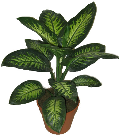 Empresa plantas - Tipos de plantas de exterior ...