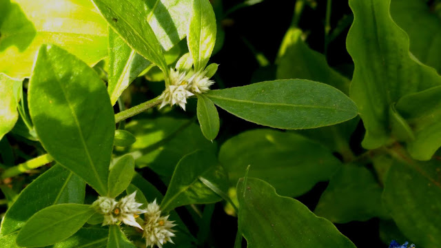White Flower and Green Leaf Photography | From'S Photography