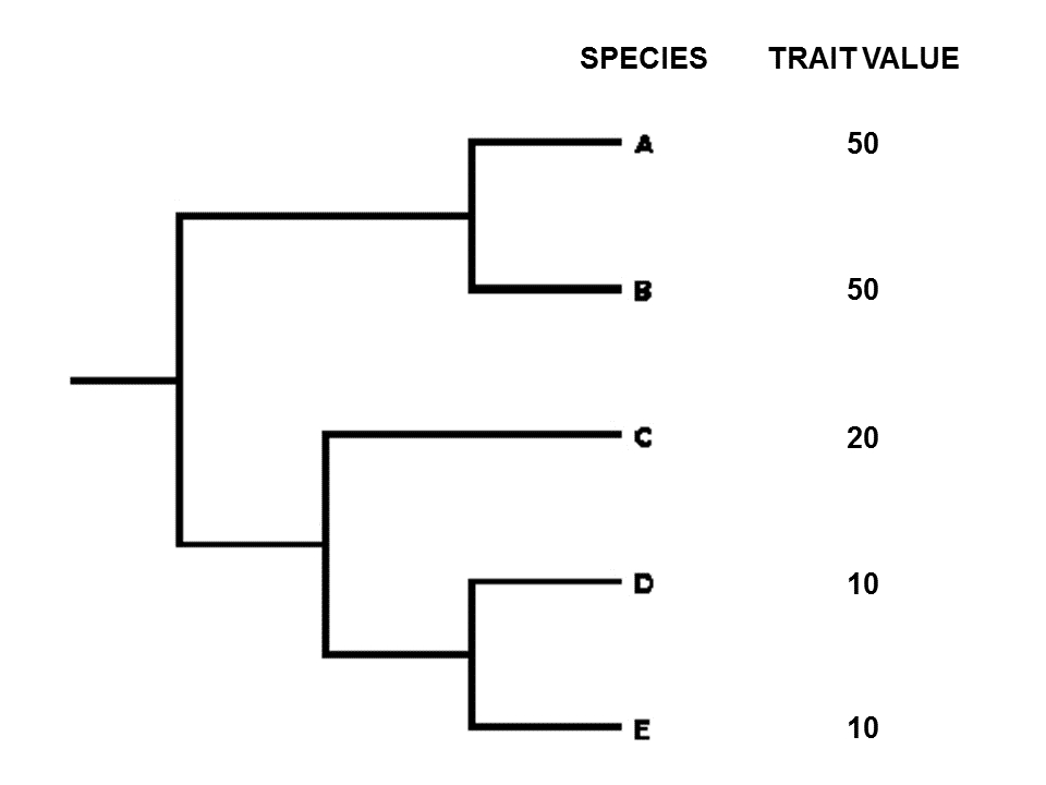 Phylogenetic Comparative Methods Pcms In R R Functions