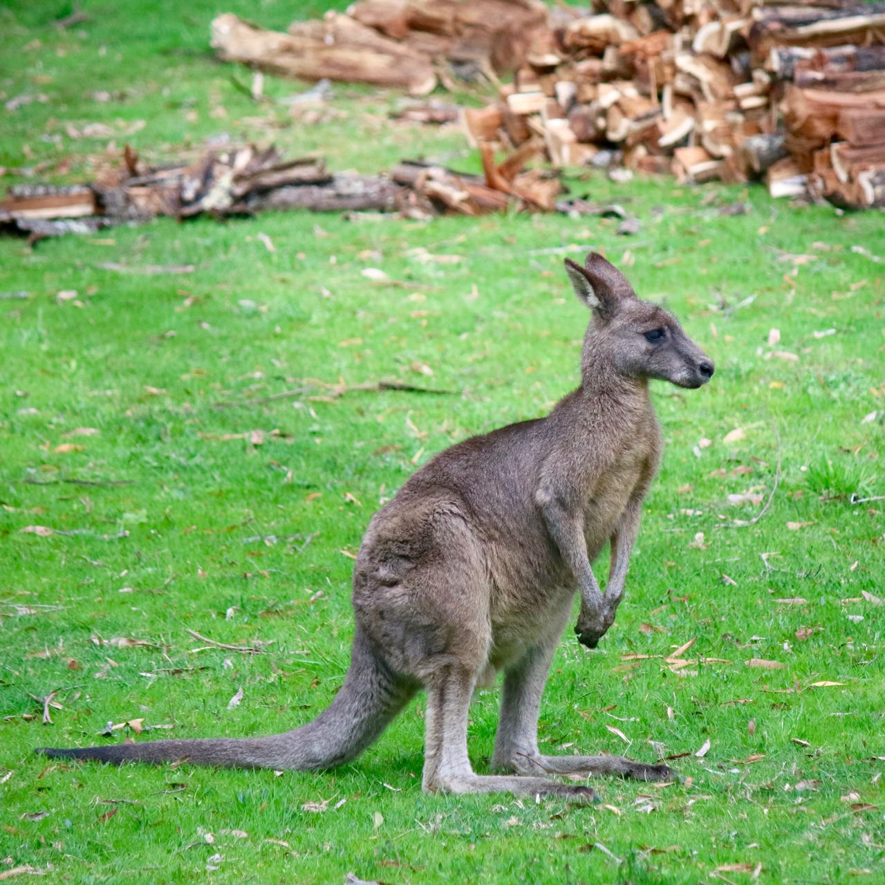 flora and fauna grampians national The flora and fauna of victoria australia wilsons promontory, grampians national an ideal way of seeing all this flora and fauna is to take a charter.