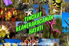 Tingkatan Keanekaragaman Hayati (Keanekaragaman Tingkat Gen, Keanekaragaman Tingkat Spesies, dan Keanekaragaman Tingkat Ekosistem)