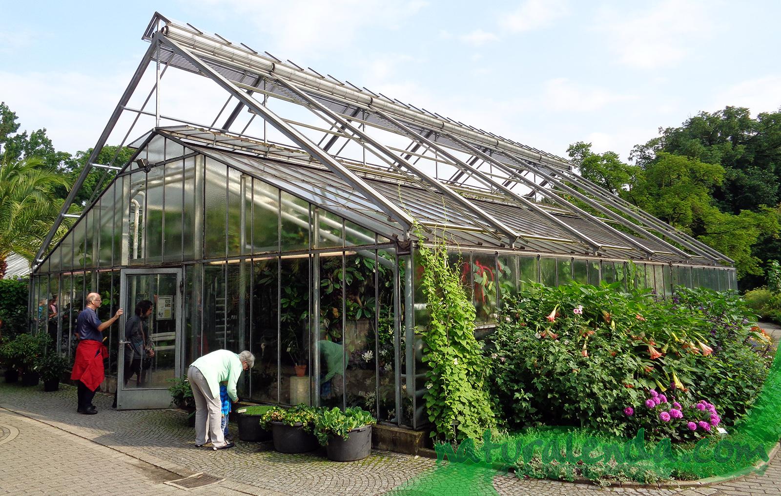 La naturaleza en casa jard n bot nico de m nster capitulo 3 for Invernaderos de jardin