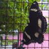 Sang Kupu-kupu Terjebak di Jeruji Kawat