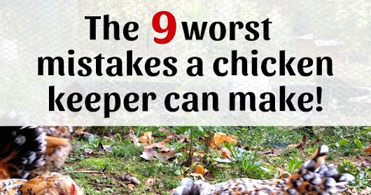 The 9 worst mistakes a chicken keeper can make