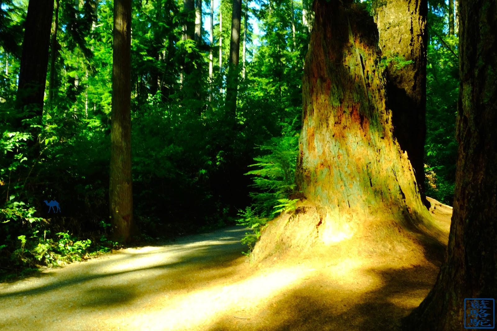 Le Chameau Bleu - Forêt de  Stanley Park - Vancouver