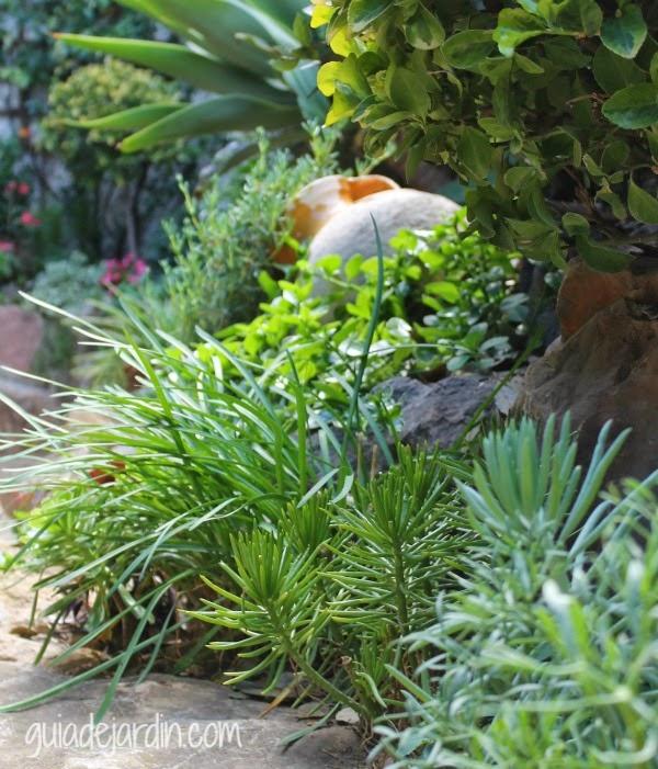 Mi jard n lleno de flores guia de jardin for Guia de plantas de jardin