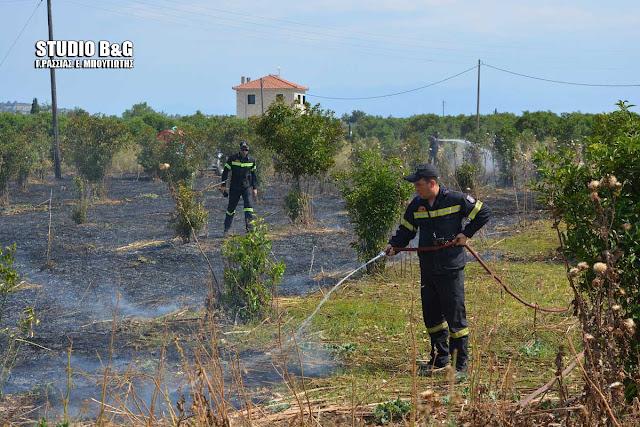 Αργολίδα: Πυρκαγιά στη Δαλαμάναρα