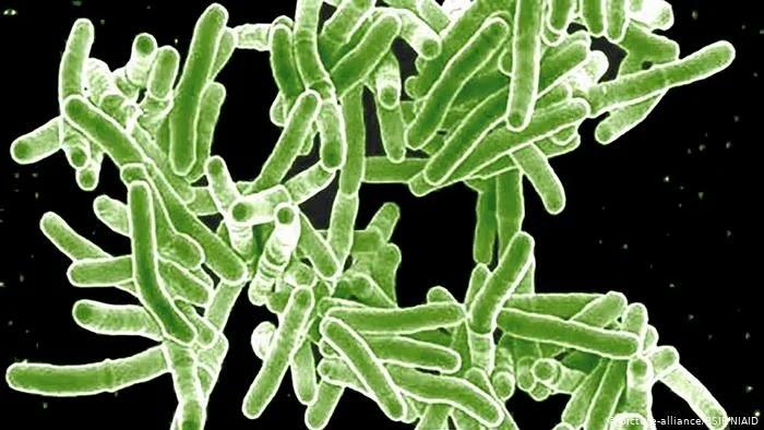 Myobacterium tuberculosis