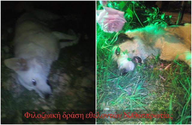 Τρία σκυλιά νεκρά από φόλες στο Φιλιάτι
