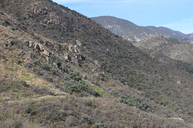 Guided%2BCoues%2BDeer%2BHunts%2Bin%2BSonora%2BMexico%2Bwith%2BJay%2BScott%2Band%2BDarr%2BColburn%2BDIY%2Band%2BFully%2BOutfitted%2B21.JPG