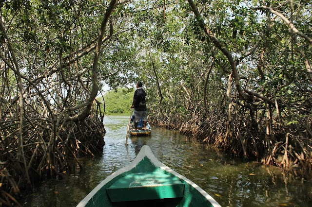 Enjoy Boat Walks in the Mangrove at Mayabunder