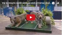 Singapore Travel Videos