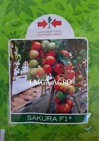 Benih tomat, Sakura F1, Tomat Sakura F1, East West, Panah Merah, Dataran tinggi,LMGA AGRO, Harga Diskon, Murah