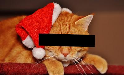 Ist der Nikolaus wirklich eine Katze?