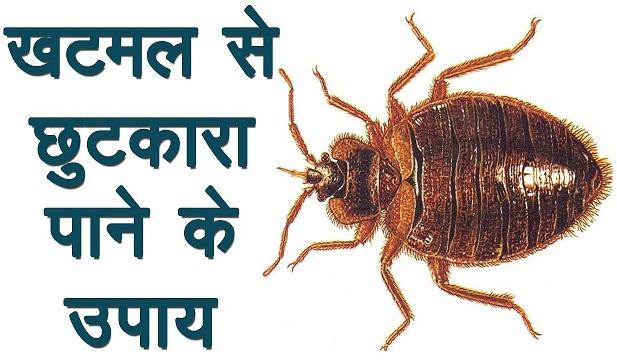 खटमल मारने का उपाय और खटमल की दवा - Khatmal se chhutkara paane ke gharelu tarike