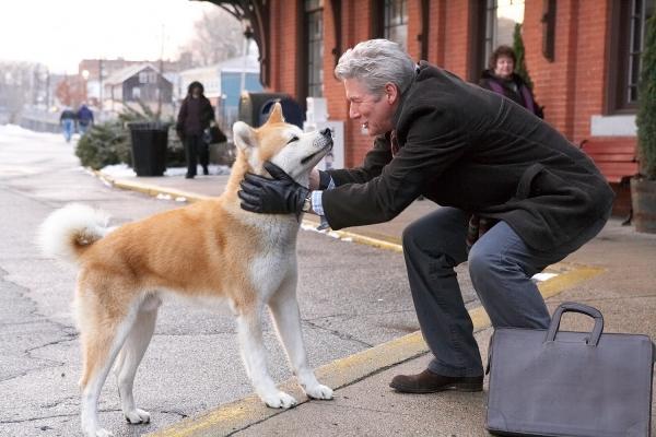 Những biểu hiện ở chó tin tưởng chủ nhân