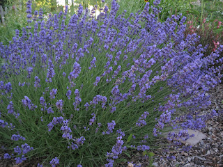 Clusters of small purple flowers.