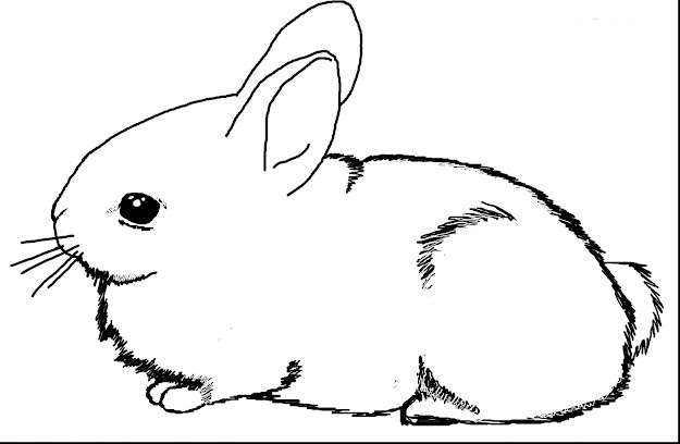Terrific Baby Bunny Rabbit Coloring Pages With Bugs Bunny Coloring Pages  And Bugs Bunny And Friends