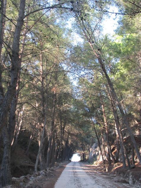 Plaka Wood Antimachia Kos