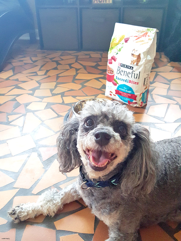 """Dogs are definitely """"man's best friend"""" and deserved to rewarded with the best of everything! Today I'm sharing why my pooches and I became """"Friends with Beneful"""" and how Beneful can benefit you!"""