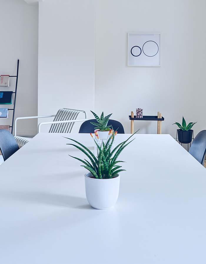 Usando suculentas na decoração de uma sala de reuniões minimalista