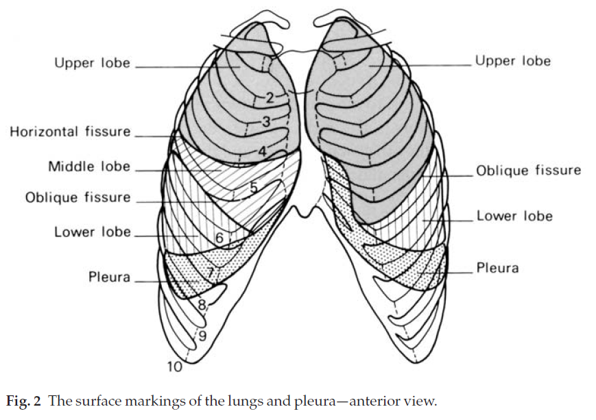 Understanding the Clinical Guide to Anatomy: The Thoracic