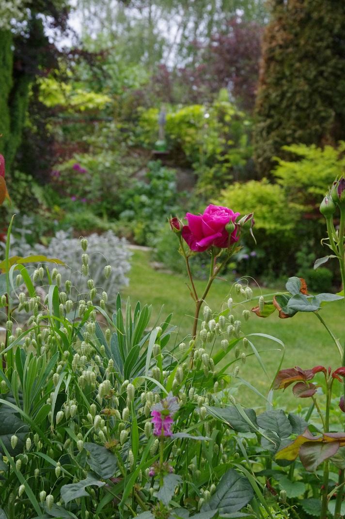 Le jardin des couronnes imaginaire for Le jardin imaginaire