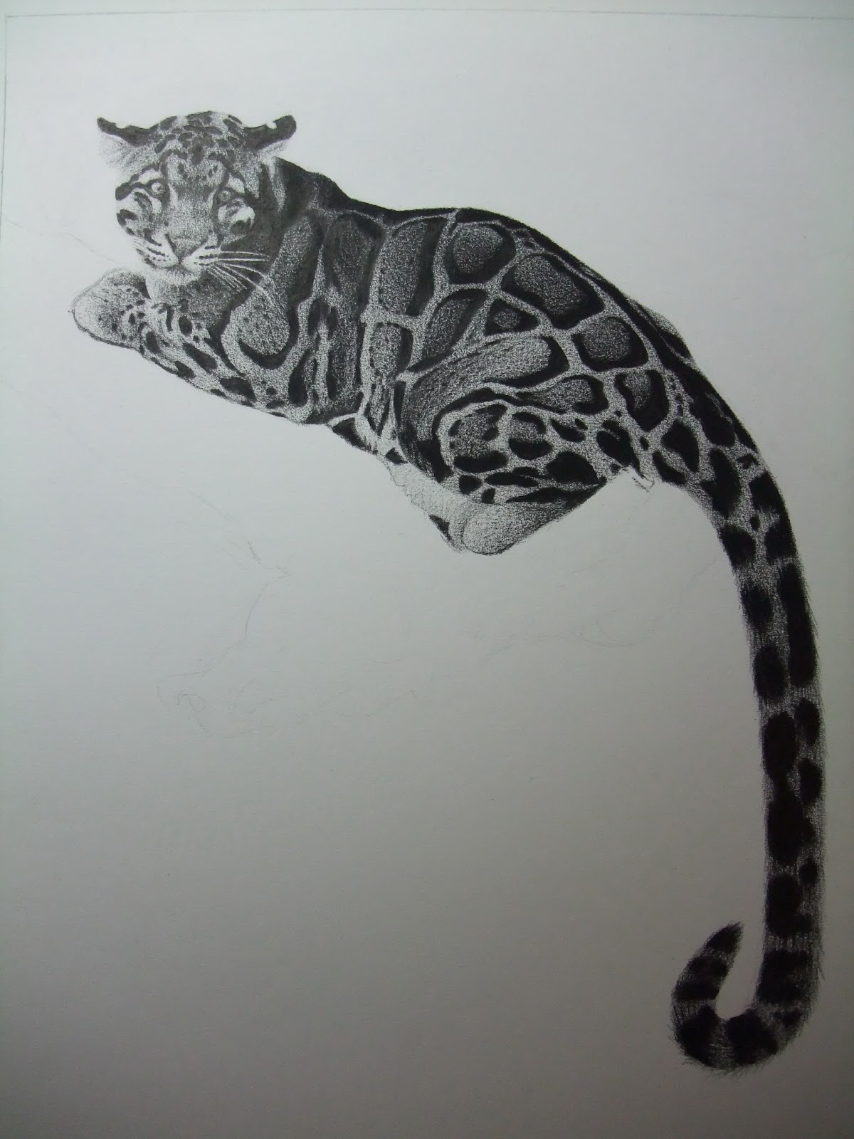 Antoine Roquain Dessin Animalier, Wildlife Pencil Art: Dessin de panthère longibande
