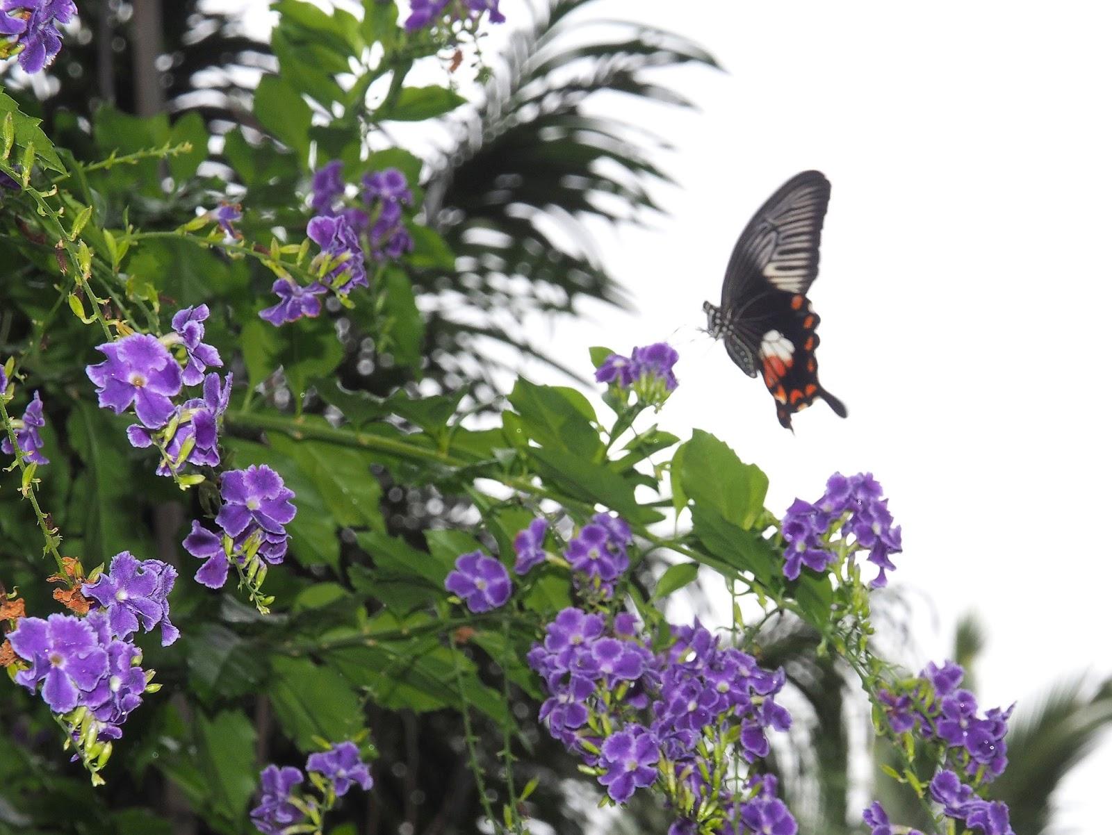 pure oxygen generators flowers and butterflies