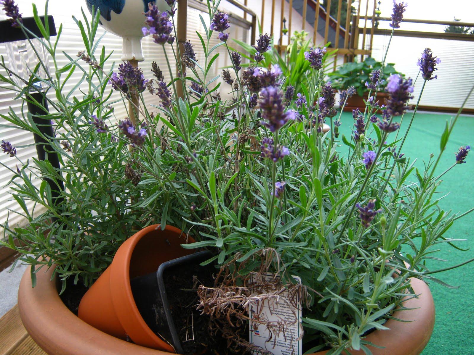 Luxus Garten Versand Design