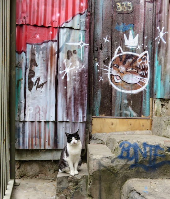 Valparaíso Street Art: Art reflects life. A real cat in front of cat street art